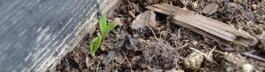 dyersgreenweed