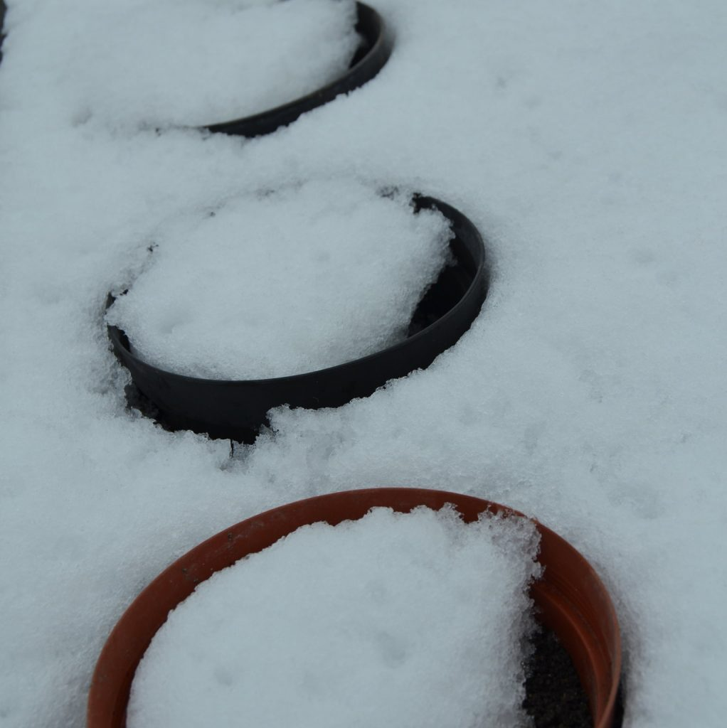 snowpots