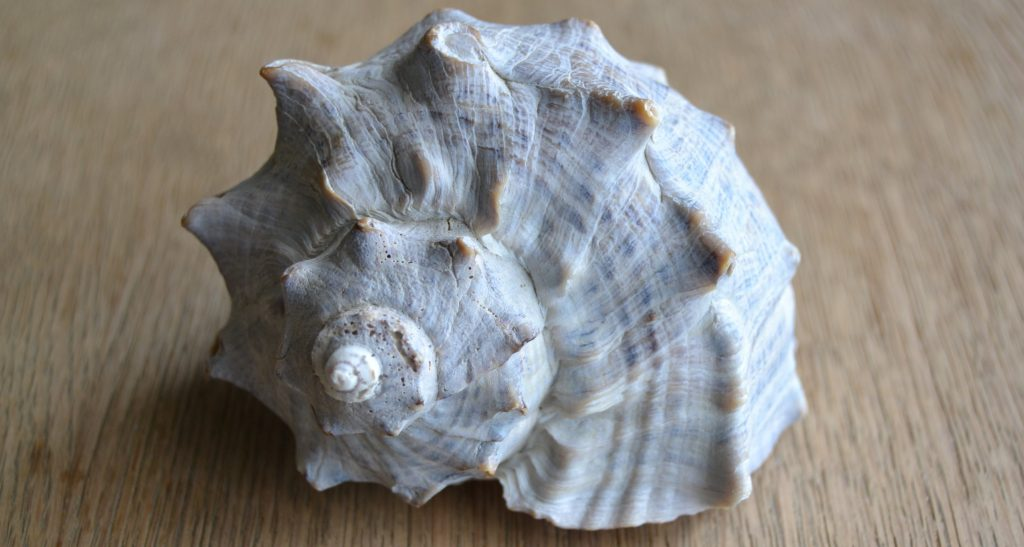 shellfront